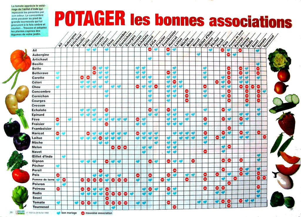 Association potager